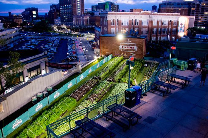 Azoteas y patios son convertidos en cultivos urbanos en EEUU