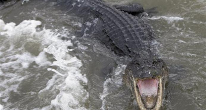Un cocodrilo ataca a un hombre cuando orinaba en una laguna