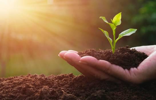 FAO: el mundo está lejos de cumplir objetivos de alimentación sostenible
