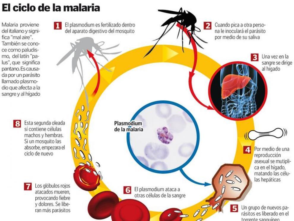 Malaria provoca tres muertes en lo que va del año y 647 casos  NOTICIARIO DIGITAL